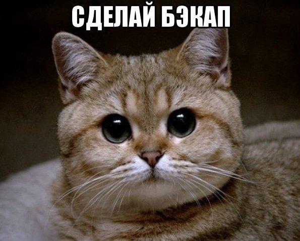 Котик плохого не посоветует